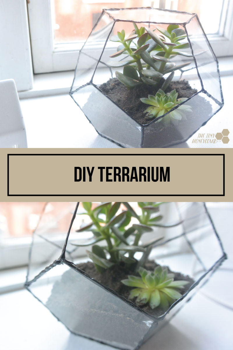 DIY terrarium. Geometric terrarium with a step by step guide video. The tiny honeycomb blog