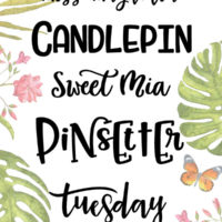 10 beautiful fonts that are perfect for crafting. These fonts will cut beautifully on your silhouette. Mix of handlettered fonts, brush fonts, monogram and more.